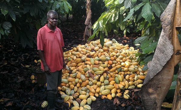 Cocoa farmer and crop of pods